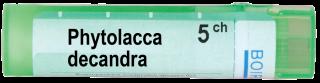 PHYTOLLACA DECANDRA   5CH