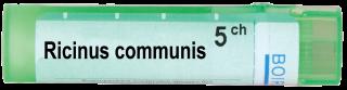 RICINUS COMMUNIS   5CH