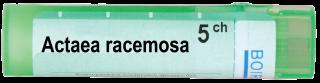 ACTAEA RACEMOSA 5 CH