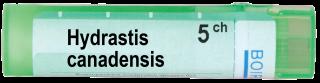 HYDRASTIS CANADENSIS 5CH