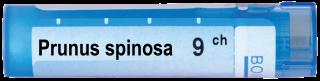 PRUNUS SPINOSA 9 CH