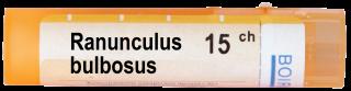 RANUNCULUS BULBOSUS 15 CH