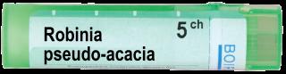 ROBINIA PSEUDO ACACIA 5 CH