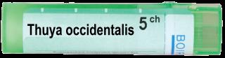 THUYA OCCIDENTALIS 5CH