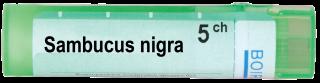 SAMBUCUS NIGRA 5CH
