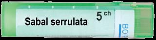 SABAL SERRULATA 5CH