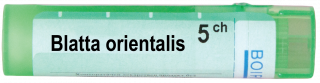 BLATTA ORIENTALIS   5CH