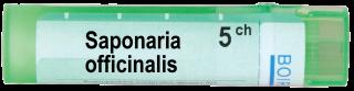 SAPONARIA OFFICINALIS 5 CH