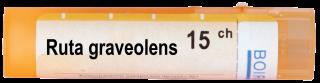 RUTA GRAVEOLENS 15CH