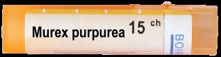 MUREX PURPUREA CH 15