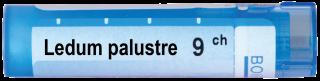 LEDUM PALUSTRE 9CН